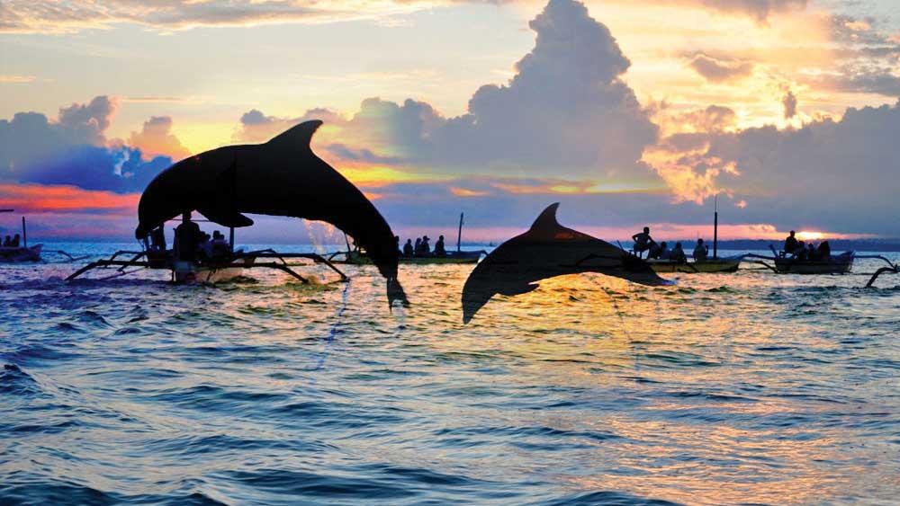 DOLPHIN TOUR COMBINE SEKUMPUL WATERFALL, DOLPHIN TOUR COMBINE SEKUMPUL WATERFALL, My Bali Trekking Tours